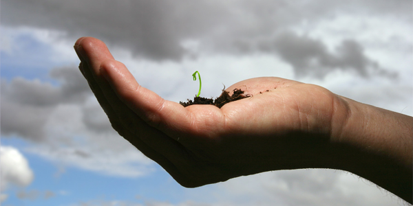 Plant sprouting in palm of hand