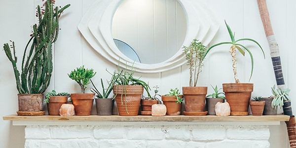 Potted plants on a shelf